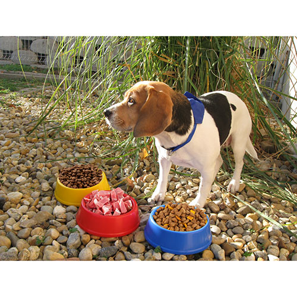 Puppy — тарелка AP718060-05