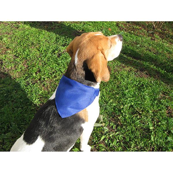 Roco — Ошейник для собак AP731481-06